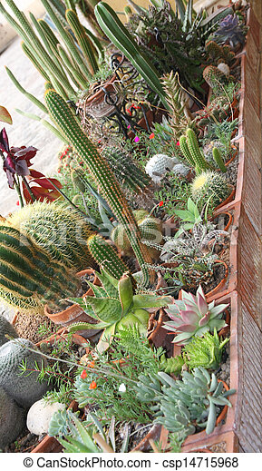 mix of many succulents and cactus with very sharp prickles and thorns of the cactus desert plants - csp14715968