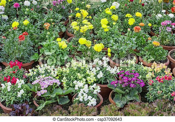 Mixed flower plants - csp37092643