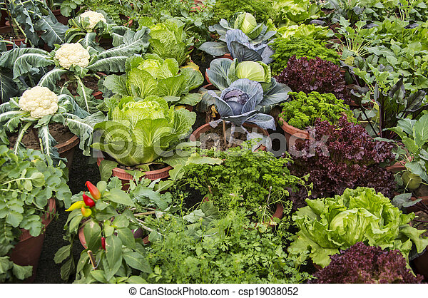 Mixed vegetables and other plants - csp19038052