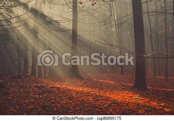 mlha, barvitý, paprsek, slunit se, list, les, podzim - csp86895175