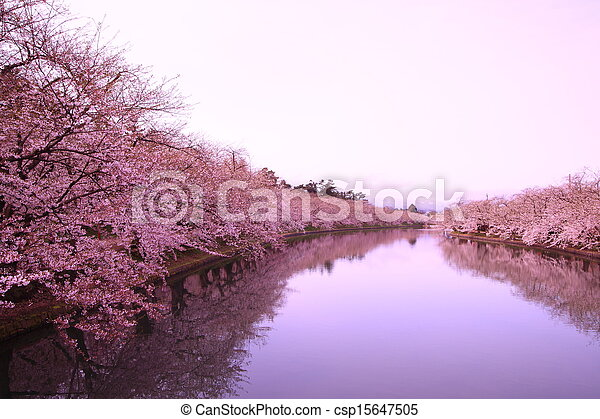 Moat and cherry blossoms - csp15647505