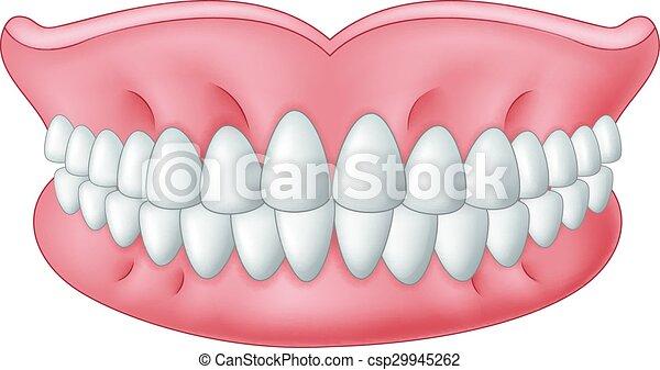 Mod le dents dessin anim isol isol dent mod le - Dessin de dent ...