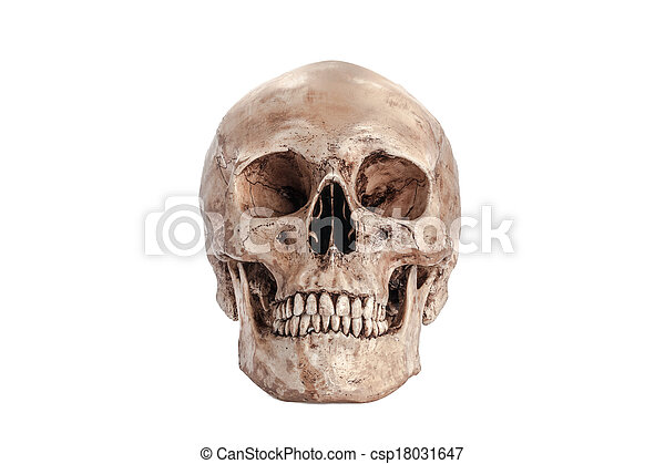 modello, cranio - csp18031647