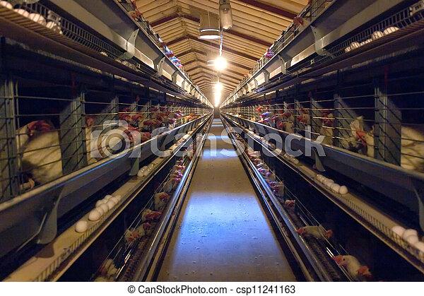 Modern Chicken Coop Farm