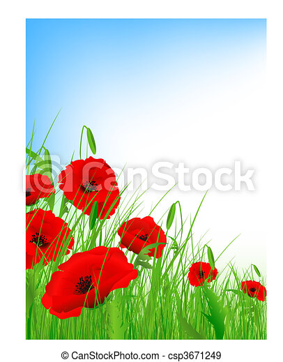 Poppy Field - csp3671249