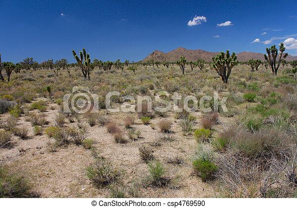 Mojave Desert - southern California - csp4769590