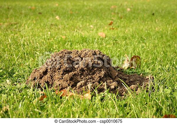 Molehill on gras - csp0010675