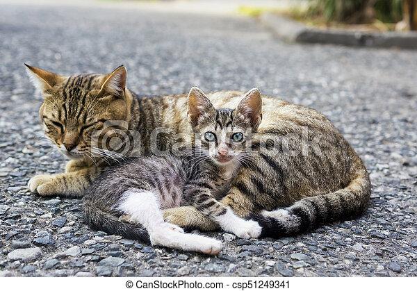 Mom Cat And Kitten Homeless Mom Cat And Weak Small Kitten Canstock