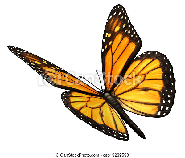 Monarch Butterfly Angled - csp13239530