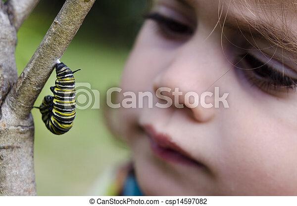 Monarch butterfly caterpillar - csp14597082