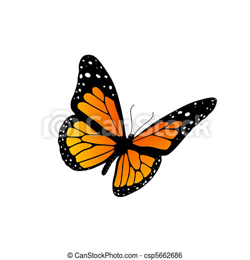 monarch butterfly illustration of a monarch butterfly isolated on rh canstockphoto com Cartoon Monarch Butterfly Side View monarch butterfly cartoon drawings