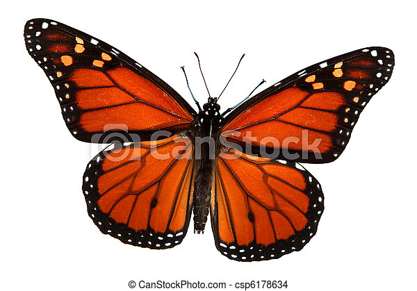 Monarch Butterfly - csp6178634