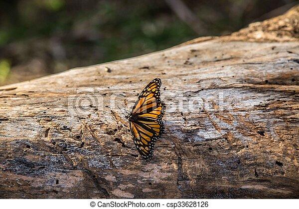Monarch on Tree Trunk - csp33628126