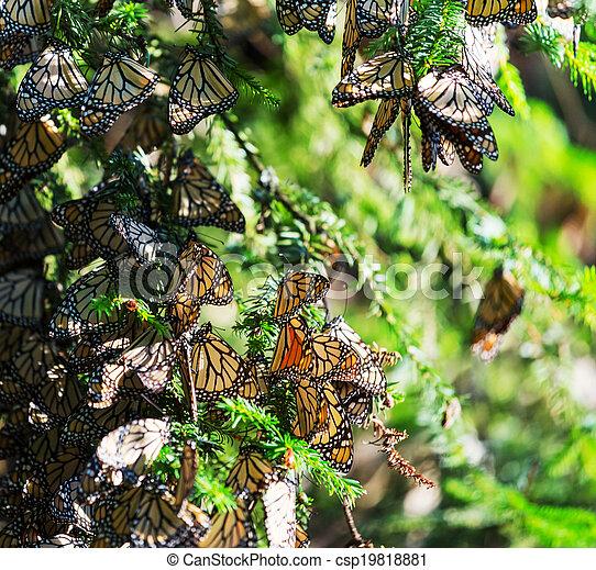 Monarch - csp19818881