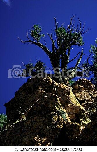 Monarch Tree - csp0017500