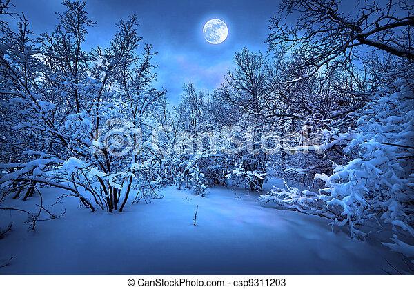 mondschein, holz, winternacht - csp9311203