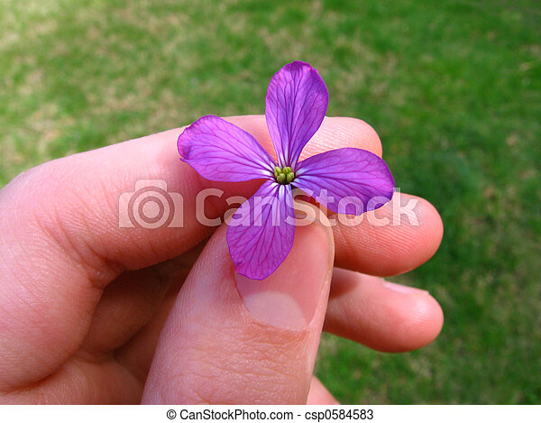 Money Plant in Hand - csp0584583