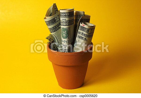 Money Plant - csp0005620