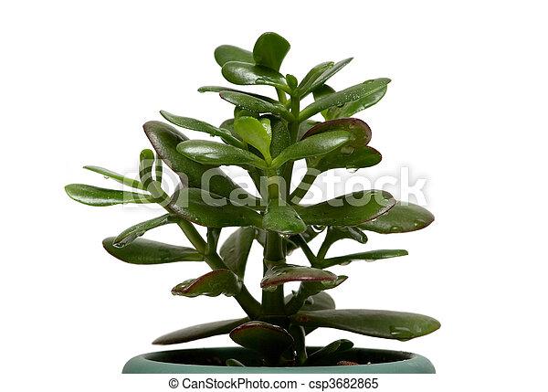 money tree - csp3682865