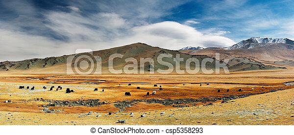 mongolian, 風景 - csp5358293