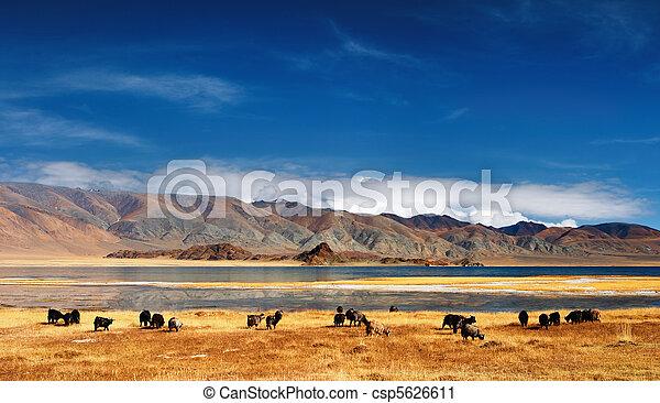 mongolian, 風景 - csp5626611