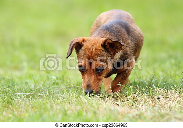 mongrel dog in the field - csp23864963