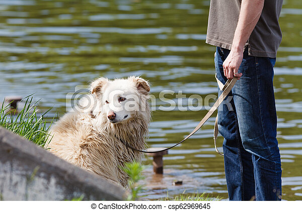 Mongrel dog on a leash with the owner - csp62969645