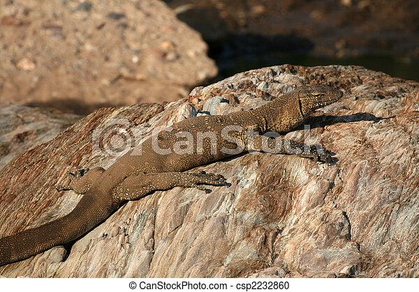 Monitor Lizard - Serengeti Safari, Tanzania, Africa - csp2232860