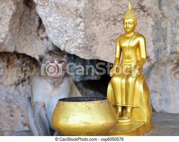Monkey andi Buddha - csp6050576