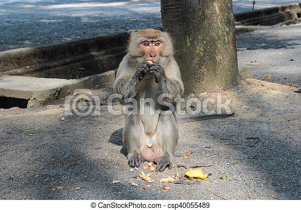 Monkey eating on the ground - csp40055489
