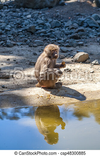 Monkey near the water - csp48300885