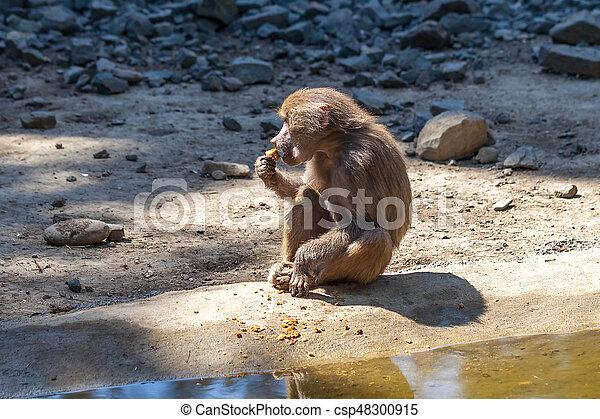Monkey - csp48300915