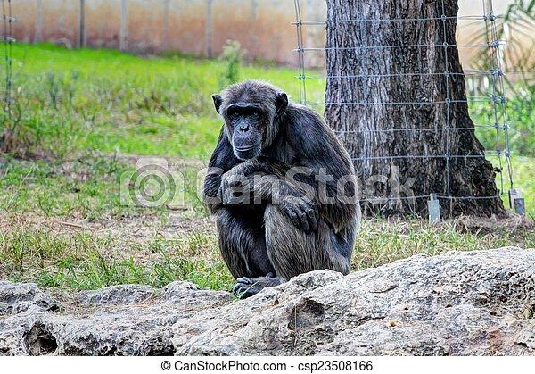 Monkey - csp23508166