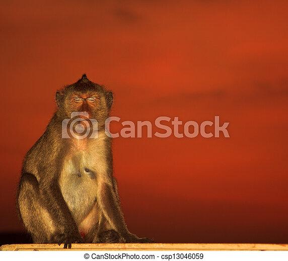 monkey - csp13046059