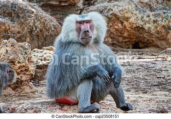 Monkey - csp23508151