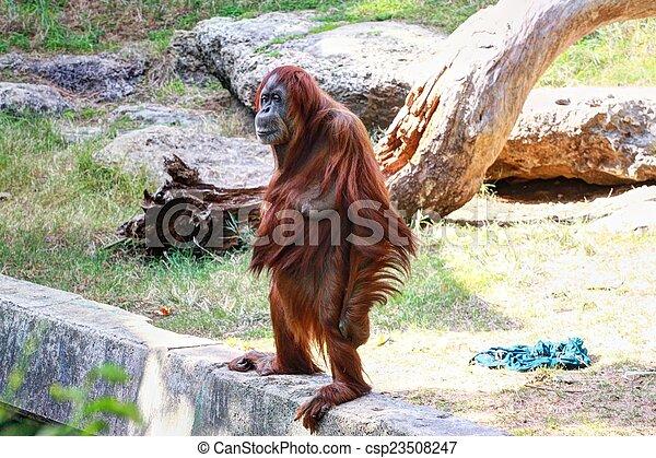 Monkey - csp23508247