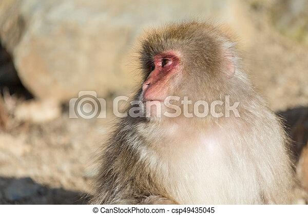 Monkey - csp49435045