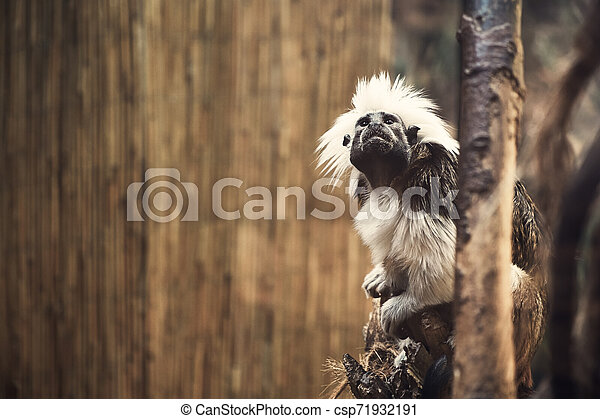 Monkey - csp71932191