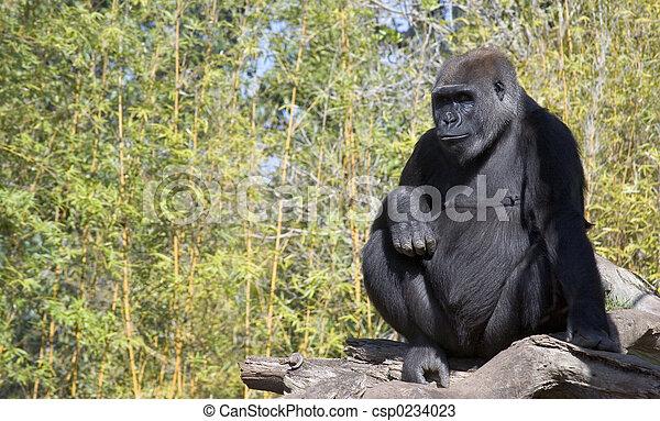 Monkey - csp0234023