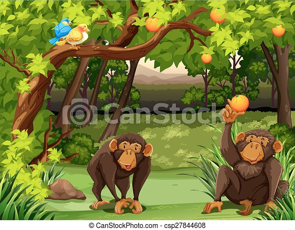 Monkey Two Monkies Sitting Under Orange Tree Canstock 794 likes · 1 talking about this. https www canstockphoto com monkey 27844608 html