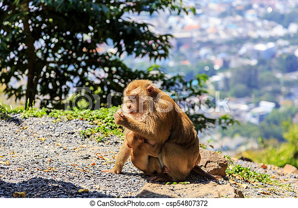 Monkey with a baby at Monkey Hill - csp54807372
