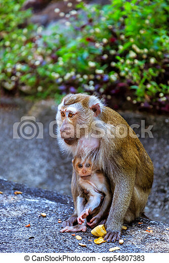 Monkey with a baby at Monkey Hill - csp54807383