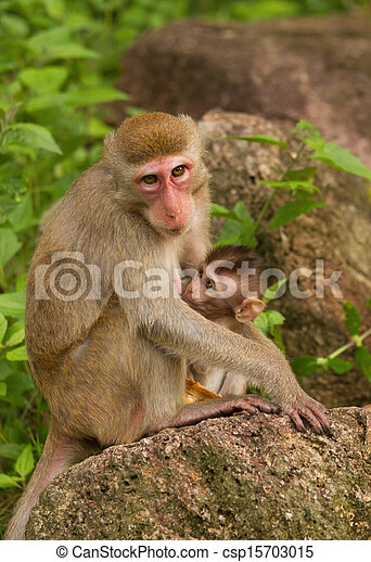 Monkey with a baby - csp15703015