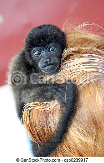 monkey with a blondy - csp0239917