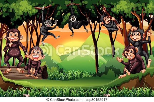 Monkeys climbing tree in the jungle - csp30152917