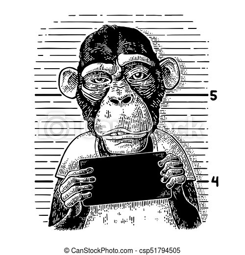 Monkeys Holding Banner Monkeys Holding Table Vintage Black Engraving Illustration For Poster Canstock