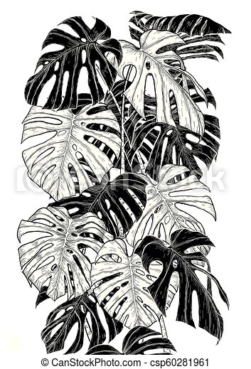 Monstera leaf sketch by hand drawing - csp60281961