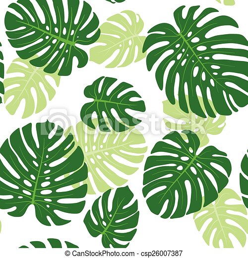 Monstera leaves background - csp26007387