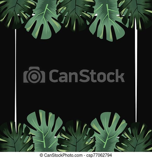 monstera leaves foliage exotic flora tropical banner - csp77062794