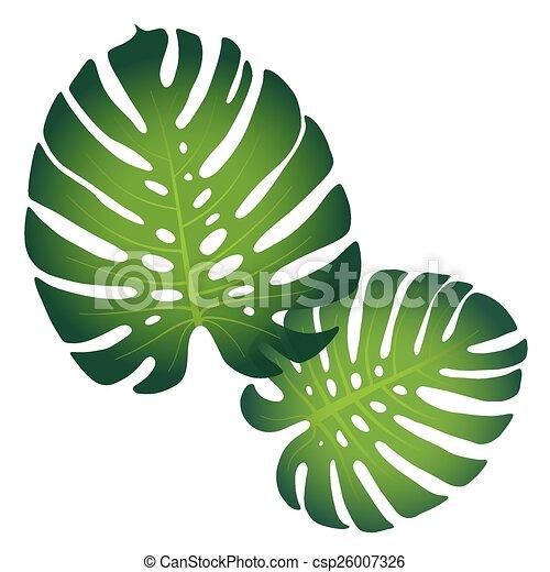 Monstera leaves - csp26007326